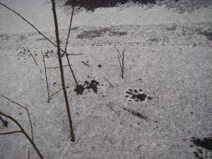 Utterspår 200900131 Hummeln