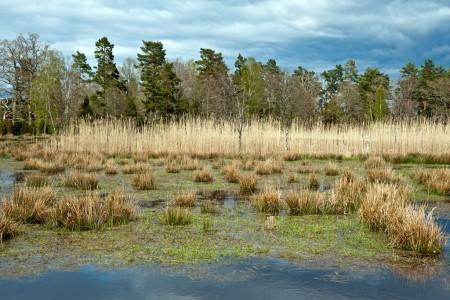 Gäddfabriken Kronobäcks våtmark länsstämman 2015
